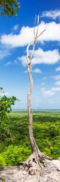 ¡Viva Mexico! Panoramic Collection - View of the Jungle by Philippe Hugonnard