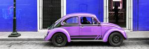¡Viva Mexico! Panoramic Collection - VW Beetle Car - Royal Blue & Purple by Philippe Hugonnard
