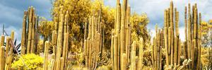 ¡Viva Mexico! Panoramic Collection - Yellow Cardon Cactus by Philippe Hugonnard