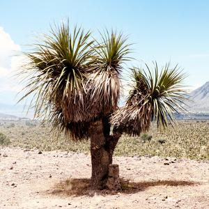 ¡Viva Mexico! Square Collection - Desert Palm Tree II by Philippe Hugonnard