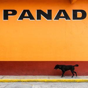 """¡Viva Mexico! Square Collection - """"PANAD"""" Orange Street Wall by Philippe Hugonnard"""