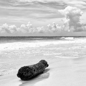 ¡Viva Mexico! Square Collection - Tree Trunk on a Caribbean Beach II by Philippe Hugonnard