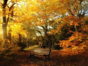 Autumn Break by Philippe Manguin