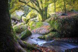 Autumn forest in Brittany by Philippe Manguin