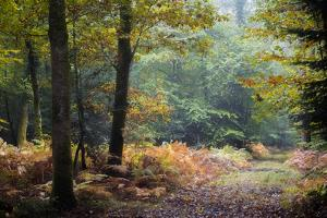 Autumn Forest Leaves by Philippe Manguin