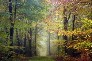 Brocéliande colored forest by Philippe Manguin