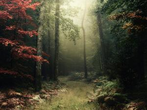 Legendary Forest in Brittany by Philippe Manguin