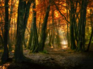 Red Forest by Philippe Manguin