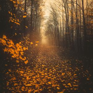 Stepping Into Autumn by Philippe Saint-Laudy