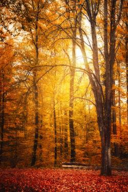 Yellow Fall by Philippe Saint-Laudy