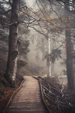 A Ride in the Woods by Philippe Sainte-Laudy
