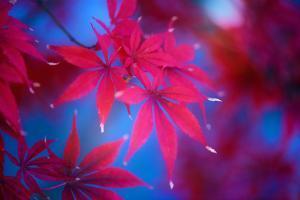 Autumn Fantasy by Philippe Sainte-Laudy