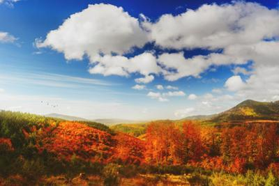 Autumn landscape by Philippe Sainte-Laudy