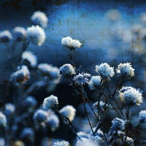 Blue Bouquet by Philippe Sainte-Laudy