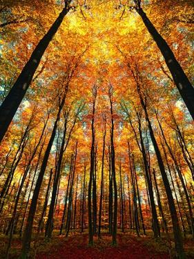 Cathedral Fall by Philippe Sainte-Laudy