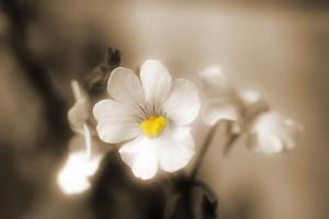 Forgive You by Philippe Sainte-Laudy