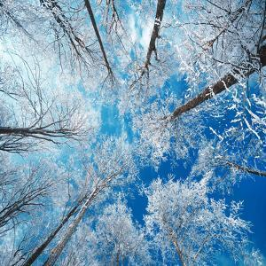 Frozen Sky by Philippe Sainte-Laudy