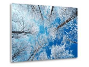 Frozen Sky by Philippe Sainte-Laudy