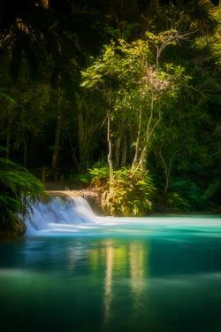 Green Paradise by Philippe Sainte-Laudy