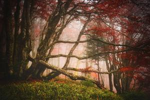Mysterious Wood by Philippe Sainte-Laudy