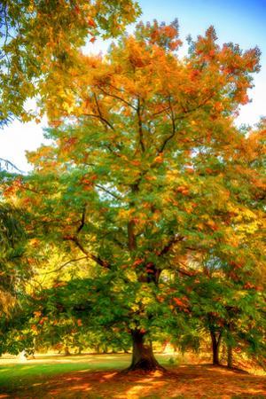 Oak in autumn by Philippe Sainte-Laudy
