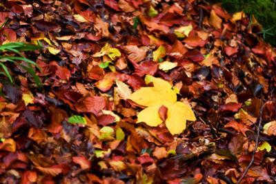 On the Autumn Trail