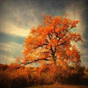 Orange Season by Philippe Sainte-Laudy