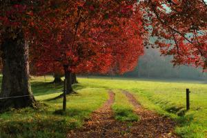 Autumn Trees in Garden by Philippe Sainte-Laudy Photography