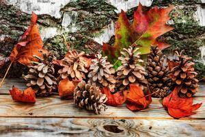Pine Cones for Fall by Philippe Sainte-Laudy