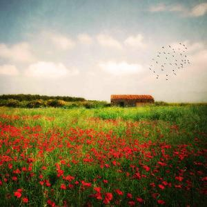Red Field by Philippe Sainte-Laudy
