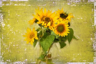 Sunflowers by Philippe Sainte-Laudy