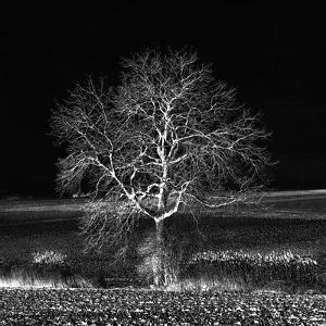 Too Zen by Philippe Sainte-Laudy