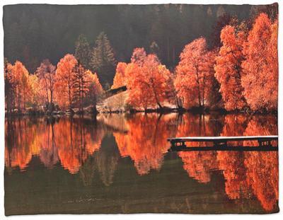 Trees Vs Trees by Philippe Sainte-Laudy