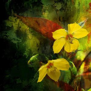 Tropical Ascent by Philippe Sainte-Laudy