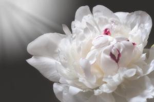 White Beauty by Philippe Sainte-Laudy