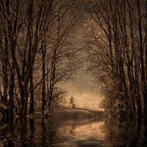 Winter Memory 2 by Philippe Sainte-Laudy
