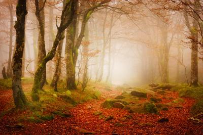 Yellow Forest Mist by Philippe Sainte-Laudy