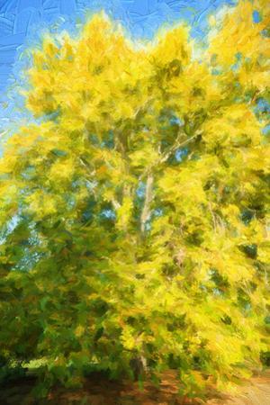 Yellow Tree by Philippe Sainte-Laudy