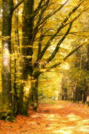 Yellow Wood by Philippe Sainte-Laudy