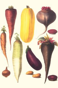 Eggplant, Nuts, and Tubers by Philippe-Victoire Leveque de Vilmorin