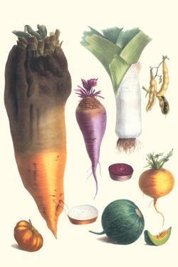 Various Vegetables by Philippe-Victoire Leveque de Vilmorin