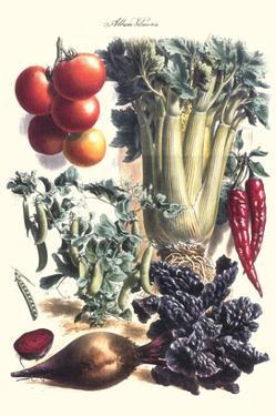 Vegetables; Beet, Hot Peppers, Celery, Tomatoes, and Peas in Pods by Philippe-Victoire Leveque de Vilmorin