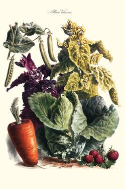 Vegetables; Cabbage, Peas, Strawberries, and Carrot by Philippe-Victoire Leveque de Vilmorin