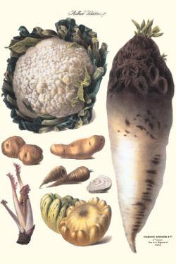Vegetables: Califlower, Gourds, Potato, Onion, by Philippe-Victoire Leveque de Vilmorin