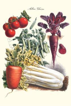 Vegetables; Carrot, Beet, Tomato, and Celery by Philippe-Victoire Leveque de Vilmorin