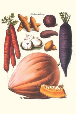 Vegetables; Carrot, Potato, Onion, and Pumpkin by Philippe-Victoire Leveque de Vilmorin