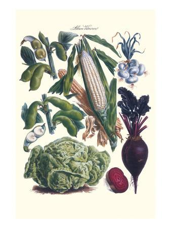 Vegetables; Corn, Cabbage, Beet, Onion, and Beans