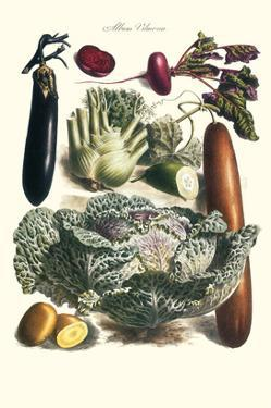 Vegetables; Cucumber, Cabbage, Eggplant, Potato, and Beet by Philippe-Victoire Leveque de Vilmorin