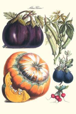 Vegetables; Eggplant, Raddish, Pumpkin, Gourd, Pepper and Okra by Philippe-Victoire Leveque de Vilmorin
