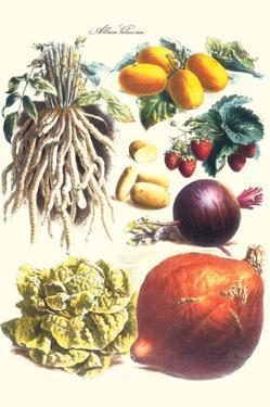 Vegetables; Lettuce, Persimmon, Turnip, Potato, Pumpkin, Strawberries, and Legumes by Philippe-Victoire Leveque de Vilmorin